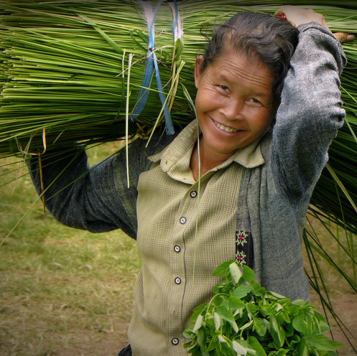 Friendly Lao woman at work by B℮n on Flickr.Via Flickr:© all rights reserved  Please take your time… and enjoy it large on black Champassak is the southernmost province of Laos and was part of the large Khmer empire in the past. The provincie is considered to be the cradle of traditional Laotian culture. This certainly is true for the valley of the Mekong river populated by Lao Loum. Tropical forests cover more than half of the country's total land area; only a tiny portion of its total area is suitable for agriculture. The floodplains of the Mekong River provide the country's only lowlands and its major wet-rice fields. Laos has a centrally planned economy based primarily on agriculture (including rice, sweet potatoes, sugarcane, cassava, and opium poppies) and international aid.  Women hold dual responsibility for farm at home. In rice farming women in Laos have a substantial role. Traditionally, men plough, make bunds and prepare seedbeds, and women do more than half of the transplanting of rice, weeding, harvesting, threshing and post-harvest operations. In some areas the traditional task division has changed due to lack of male labour. Women are increasingly involved in land preparation, irrigation and preparing bunds and seedbeds. Of all the places we've visited, Laos probably wins the award for Friendliest Country. Despite Laos poverty and isolation, its people were some of the kindest and most outgoing we've ever met. Photo of a smiling lady at work taken at the temple complex of Vat Phou.  Champassak is de zuidelijkste provincie van Laos en maakte ooit deel uit van het grote Khmer rijk. Voordat het onderdeel werd van het Laotiaanse koninkrijk behoorde Champassak tot het Cambodjaanse rijk van Angkor. De provincie bestaat bekend als het echte Laos, de bakermat van de traditionele cultuur. Dat geldt in ieder geval voor de vallei van de Mekong die wordt bevolkt door de Lao Loum, de etnische Laotianen. Laos is het enige land in Zuidoost-Azië dat geheel door andere landen wordt omsloten. Het ontbreken van een kustlijn is een van de redenen voor het isolement waarin het land eeuwenlang heeft verkeerd. Het land heeft een bevolking van vijf miljoen mensen. Van de inwoners leeft driekwart in de vruchtbare dalen langs de Mekong en zijn zijrivieren. De overige Laotianen bevolken de berggebieden en hoogvlakten. Opvallend is de sterke positie die de vrouwen binnen de familie innemen en ze doen zelfs het meeste werk op de rijstvelden. De natte rijstbouw is het voornaamste middel van bestaan.