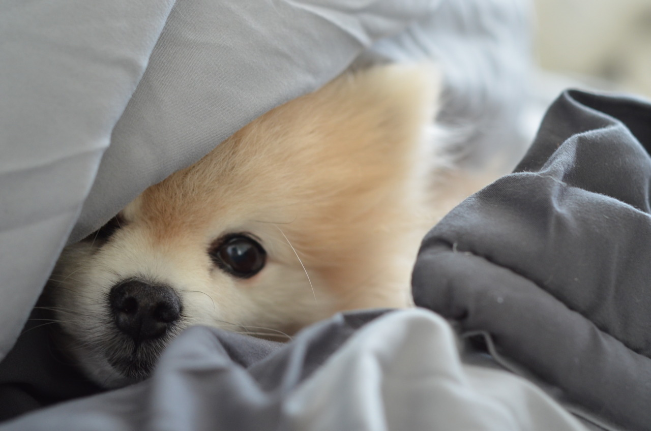 i'm snuggling in bed on a sunday morning. you should be doing the same.
