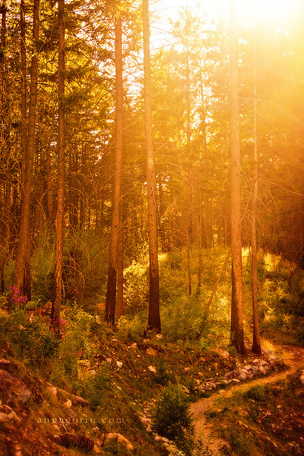 Evening among the trees in Hamilton, Montana on Flickr.