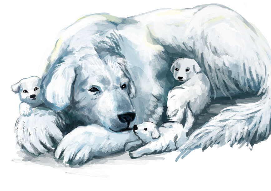 feignedsobriquet:  which are better: polarbear dogs or luck dragons?