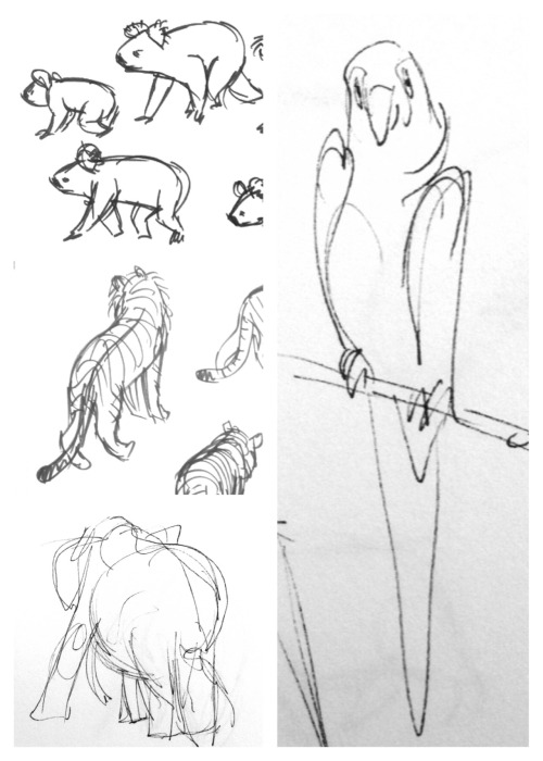 A preview of the sketches I did at the zoo today!
