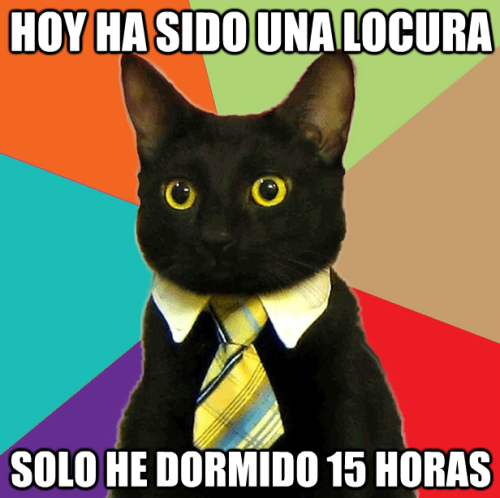 Business Cat vive al limite