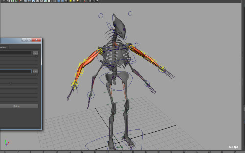 Building the skeleton and muscles