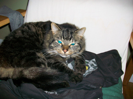 "wakeupyourcat:    Wake up your cat Looks like Current Status: Rampage imminent  Anger Level:     7/10 Notes: ""Just woke up my housemate's cat, Finn. Hope you like it!"" Finn Woken by Eric  Humans trolling cats…Problem?"