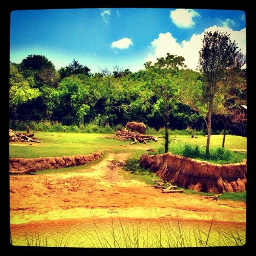 The big guy..#elephant #bigguy #zoo #dallas #texas #usa #iphone4s #iphonography #iphotography #instagramers #instagramhub #instagram #instagood #instamood #animals #photography #picoftheday #dailypic #dailyphoto #photooftheday #picturewow  (Taken with Instagram)