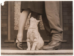"""Soldier's goodbye & Bobbie the cat""By Sam Hoodc. 1939-45"