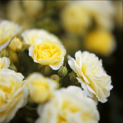 floralls:  Bouquet 2010 (by yocca)