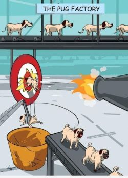 the-absolute-funniest-posts:  ctellex: Pug factory. Follow this blog, you will love it on your dashboard