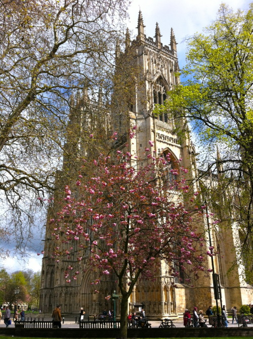 Reasons to love North Yorkshire: #3: The Minster, in spring sunshine.