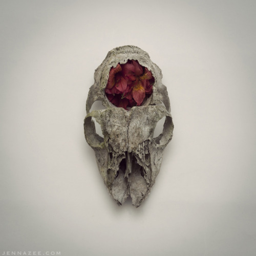 Weathered skull.   Print Shop: ∆