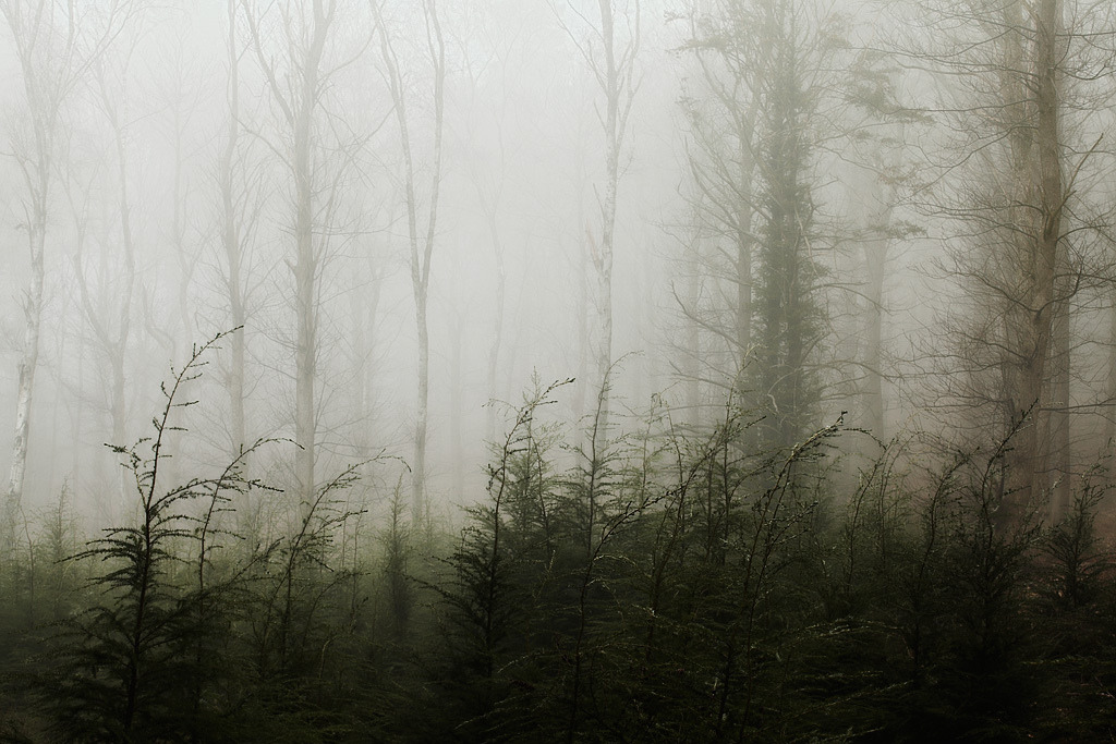 mykindafairytalee:  Forest Fire (by milouvision)