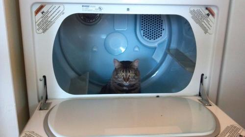 thefluffingtonpost:  PHOTO OP: Dryer Lint Via stupidin3languages.