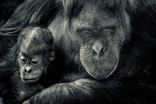 worldlyanimals:  Mother's love (pattoise)