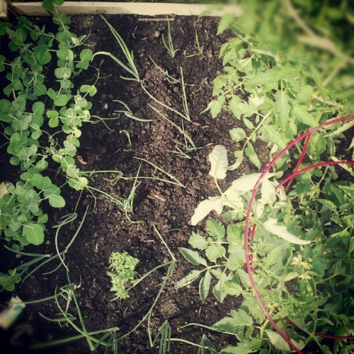 #garden #mosgarden 06_09 (Taken with Instagram)