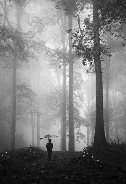 phytos:  Hengki Lee - A Path to Solitude
