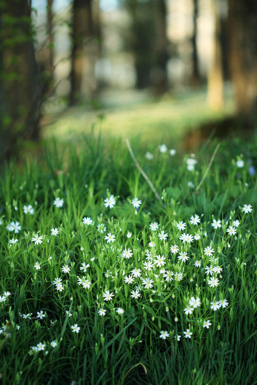 ohsimplelife:  It's spring! (by Youronas)