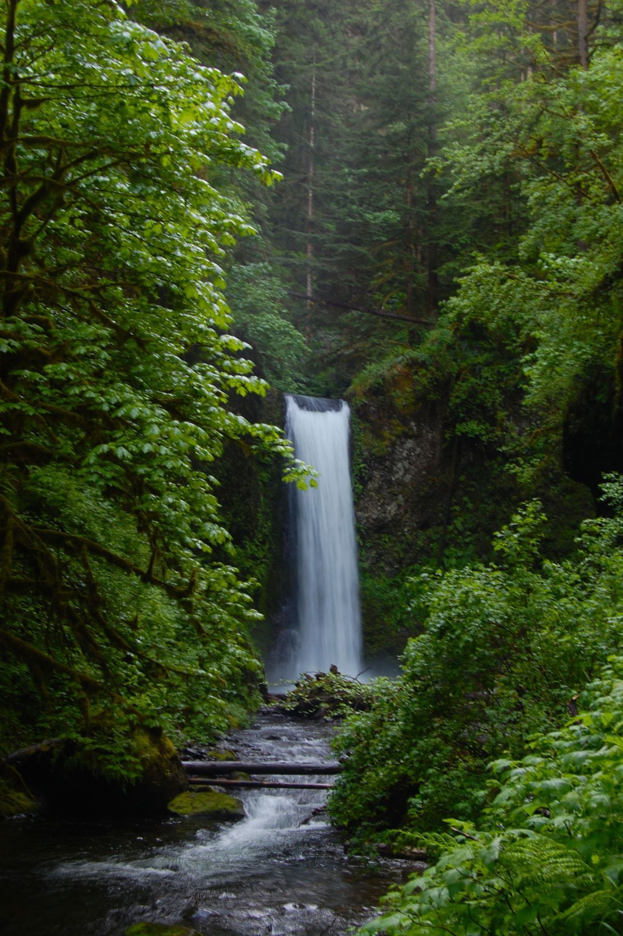 A waterfall along Multnomah Creek above the falls. Larch Mountain trail. The Gorge, Oregon.