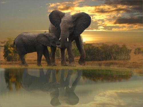 Elephants in the bush By:cowboy