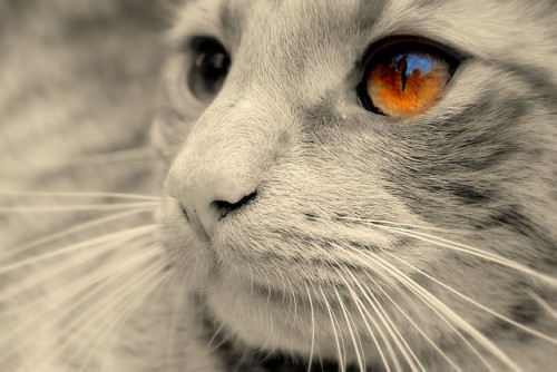 Eyes and whiskers ! by Nicolas Valentin on Flickr.
