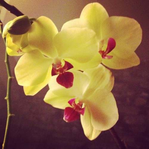 New orchids I purchased today (Taken with Instagram)