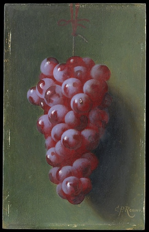 wasbella102:  Still Life with Grapes, Carducius Plantagenet Ream
