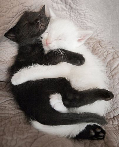 Sweet Dreams and Cuddles Wonderful Friends :) via:cutestpaw