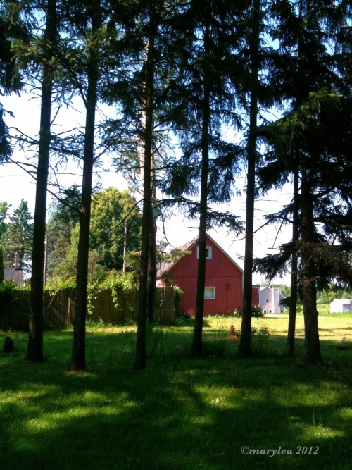 Friday. Pine trees and red barn. June 9, 2012.