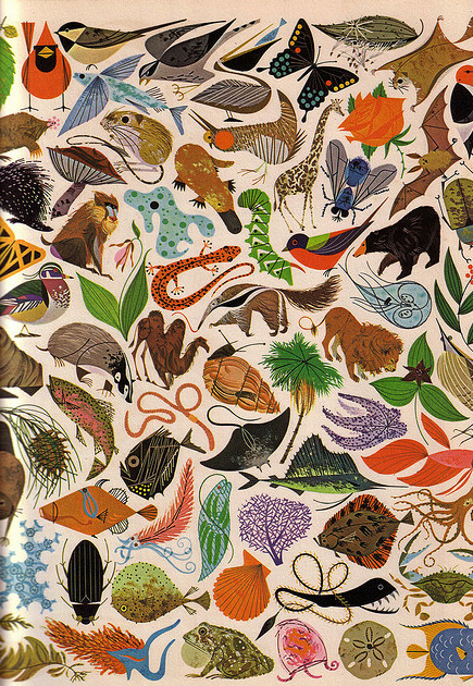 From Charley Harper's wonderful Tree of Life.  More of Charley's work here.
