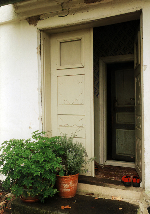 Aromatic herbs at door