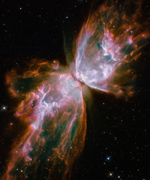 n-a-s-a:  The Butterfly Nebula from Upgraded Hubble Credit: NASA, ESA, and the Hubble SM4 ERO Team Nebula from Upgraded Hubble)