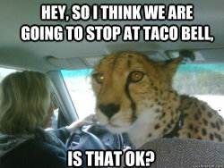 funny-memes-blog:  Cheetah wants to stop at Taco Bell