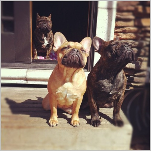 anthropologie:  A couple of pups, soaking up rays. Via: Lu tranchesi   this is how i feel when i come out of the archive…