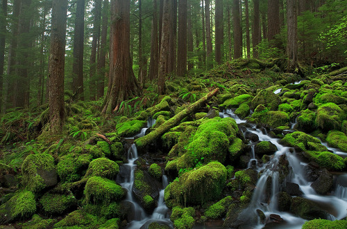 "morgondagg:  ""Creek In Rainforest"" by Hong Zeng"