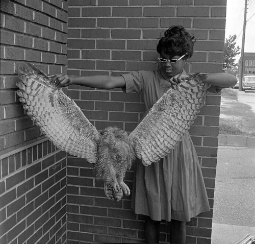 auntada:  Young woman holding hawk Winterville, North Carolina (Pitt County) July 6, 1963 The Daily Reflector Image Collection, Joyner Library, East Carolina University