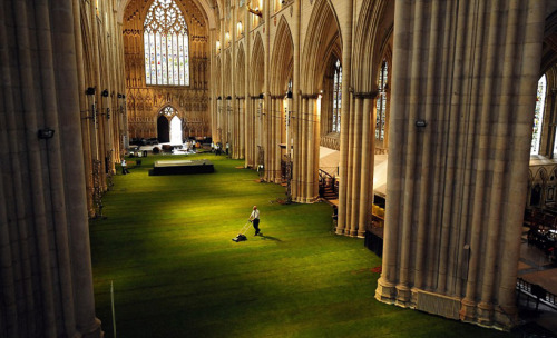 flavorpill: york minster cathedral interior covered in grass