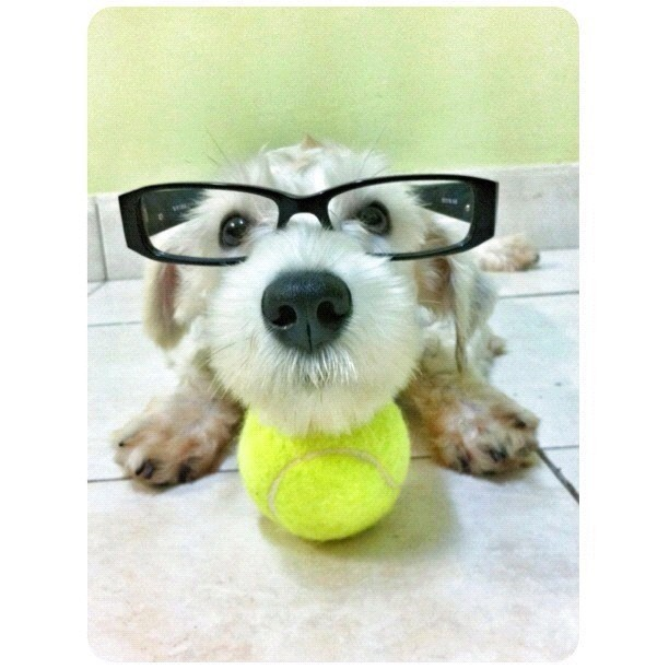 Cute photo ::: From @yklim ::: #funny #ig #glasses (Taken with Instagram)