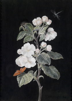 artshers:  Margaretha Barbara Dietzsch  - Apple Blossoms with Butterflies 1795