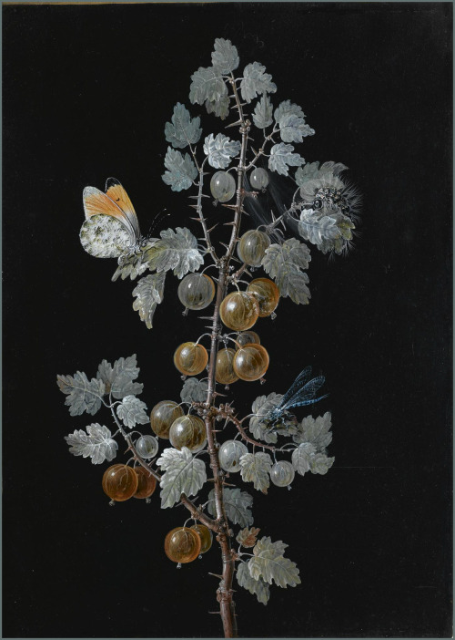artshers:  Margaretha Barbara Dietzsch - A Gooseberry Branch with Dragonfly, Butterfly and Caterpillar