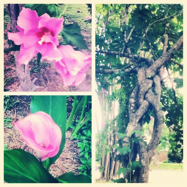 likethemoonandstars:  on a walk :) #flowers #pretty (Taken with Instagram)
