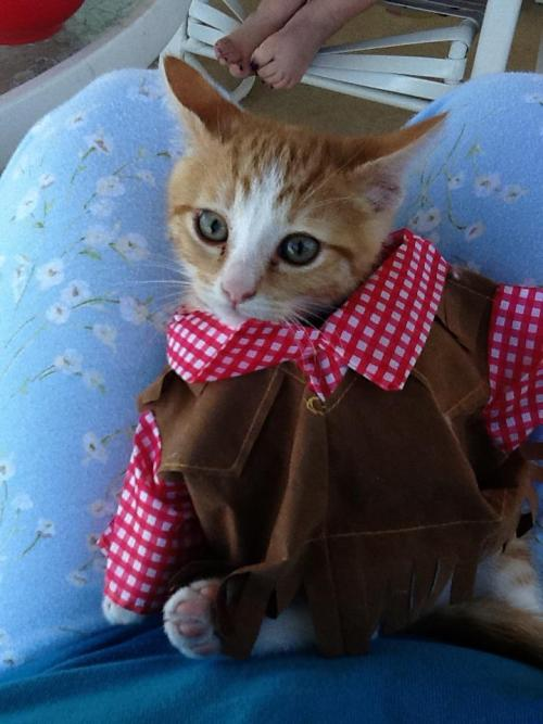 felinefriends:  The girl I babysit dressed her kitten up as a cowboy!