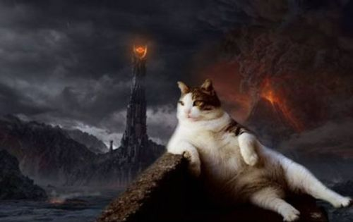 thefrogman:  One does not simply lounge into Mordor.