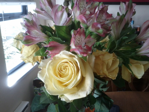 Suitor brought me yellow roses. I DIED. Might as well become a governess, I suppose.