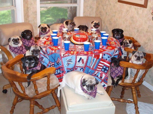 These puggies are ready to paaaaarty! (via dogbirthdays)
