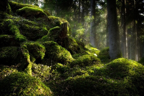 lori-rocks:  Green (by ulfbjolin)