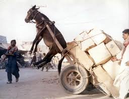 Practice safe Donkey loading! Follow all your local and state Donkey safety laws if not your Ass will be in the air!