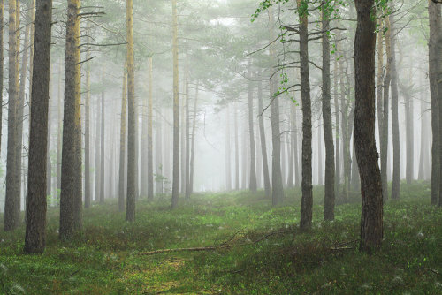 animalgazing:  foggy morning XIby *indojo