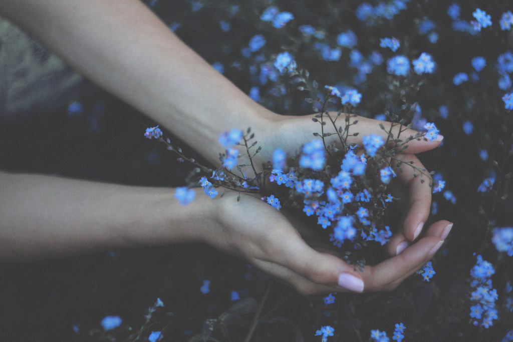 forget me not (by Annija Muižule)