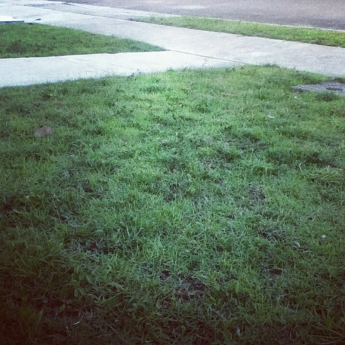 #grass #nature #puertorico #lawn (Taken with Instagram)