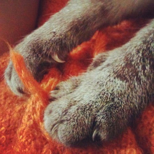 #kittypaws #cute #kitty (Taken with Instagram)