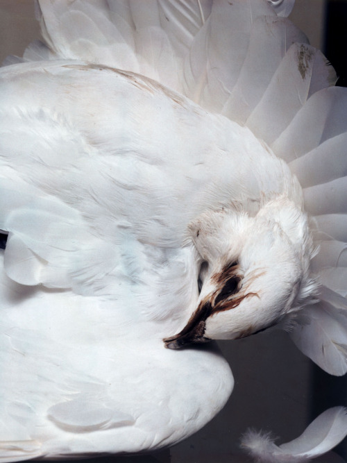 deathandmilk:  Nick Knight